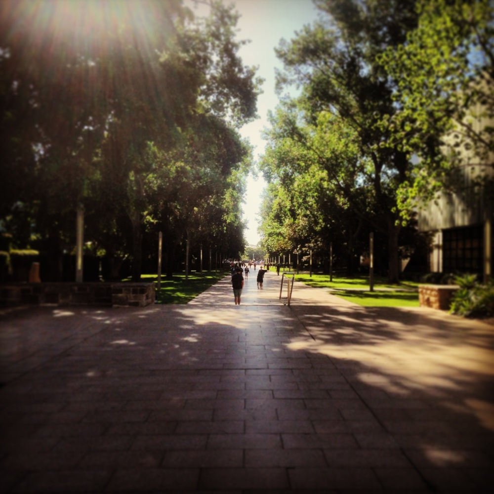 Afternoon UNSW