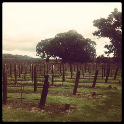 At the Barossa